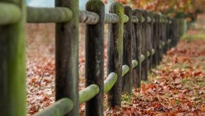 fence with green moss and leaves how to set boundaries spiritual blog